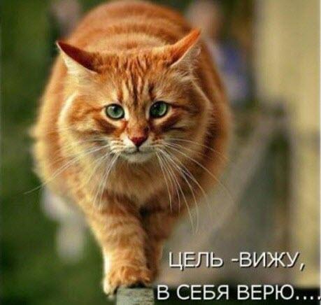 Ограбление «Вконтакте